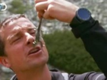 Платиха глобите на Беър Грилс за яденето на жаби и плуването в езеро на ...