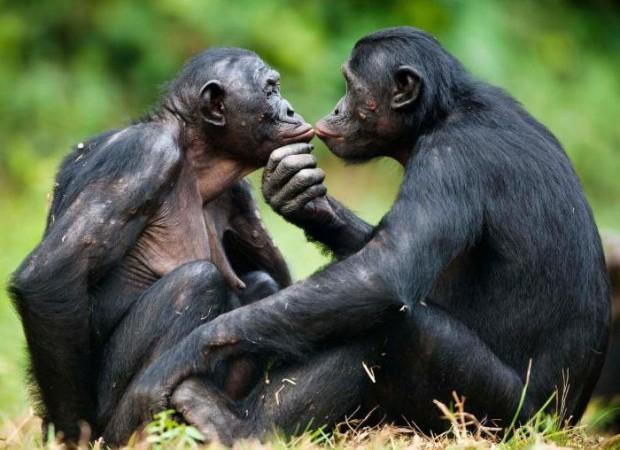 Еднополовите двойки са не само обичайни в животинското царство, те