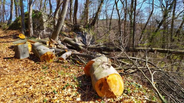 30 пространствени кубически метра дърва за огрев, които са добити