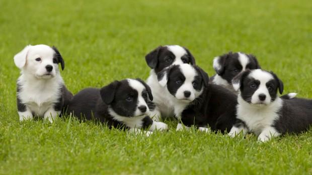 Активисти спасиха 79 кученца от умъртвяване с цел продажба на