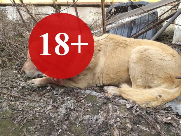 За поредна жестокост към животни в Бургас съобщават от организацията