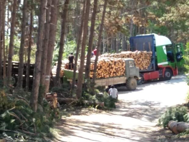 Варненци излизат на седмипореден протестсрещу изсичането на защитна гора в