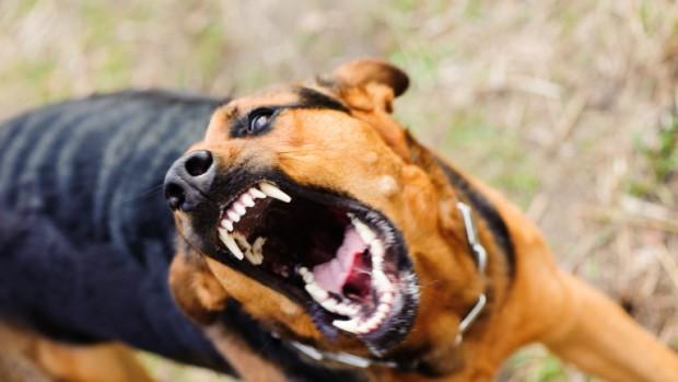 iStock 11-годишно момче е нахапано по лицето от куче в село
