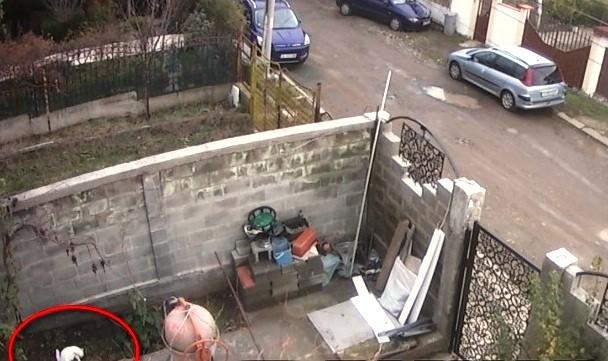 Флагман Газов пистолет и въздушна пушка са открили разследващите в колата