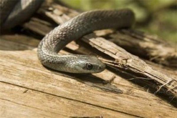 Змия ухапа медицинска сестра от столицата по време на излет