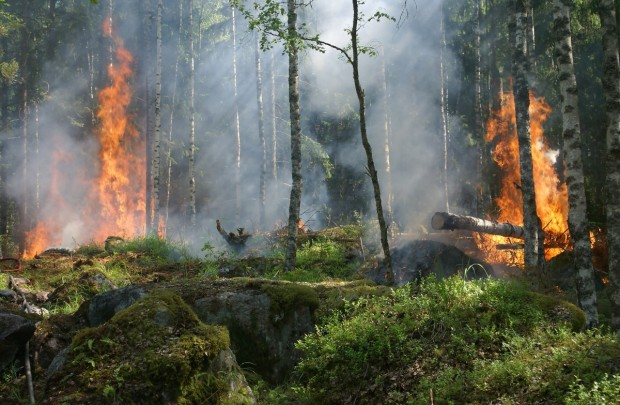 Човешка небрежност е причината за възникналия пожар в местността