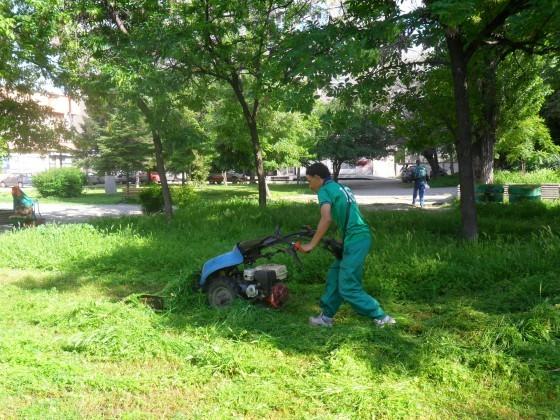 Читател на Plovdiv24.bg се оплака, че кърлежи са нападнали зелените