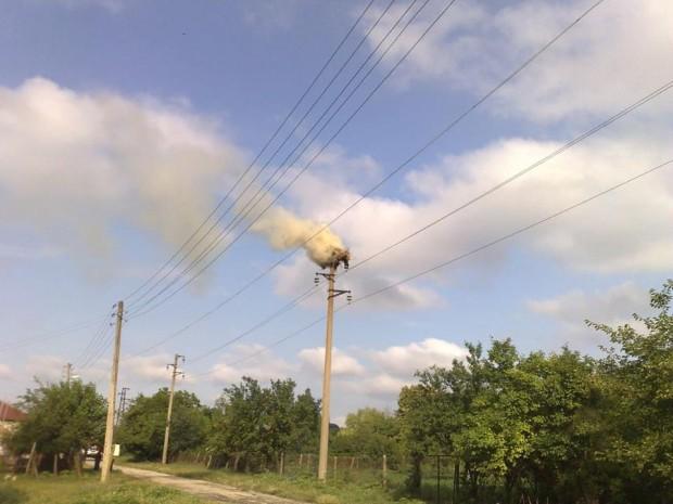 Три новоизлюпени щъркелчета загинаха при пожар в девненското село Падина,