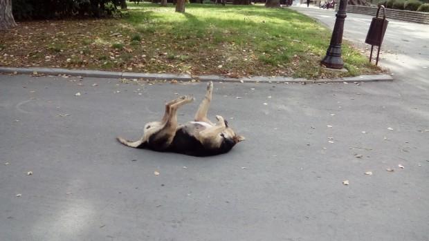 Уличните животни няма как да бъдат защитени. Зоополицията не работи,