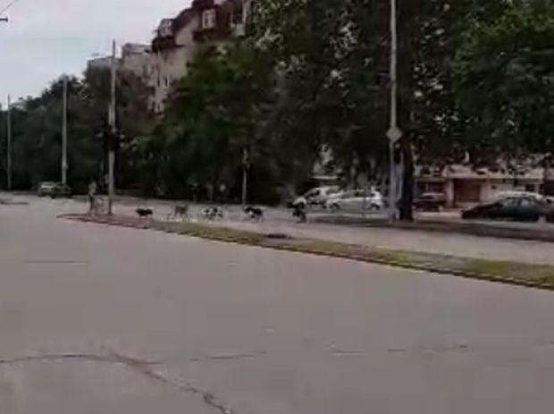 Стряскащо видео изпрати до Plovdiv24.bg наш редовен читател. От думите
