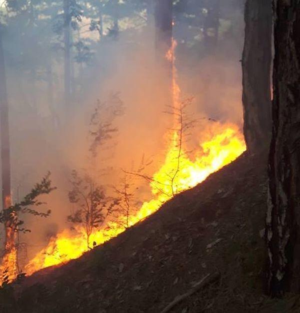 Над 50 декара горски масиви са обхванати от пожара, започнал