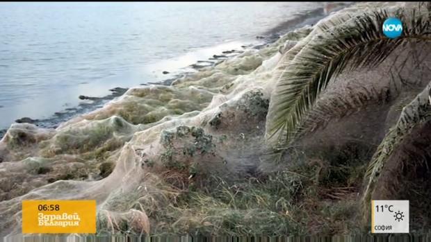 Гигантска паяжина покри плаж на остров в Гърция. Тя е