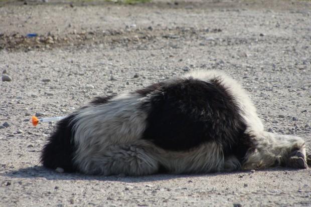 Психичноболен мъж уби по жесток начин куче в Благоевград.Сигнал за
