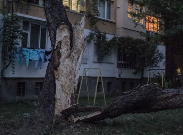Огромно дърво падна в