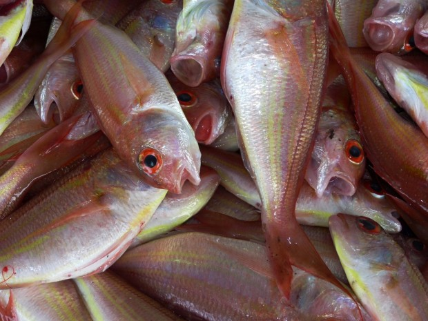 Засилен контрол на търговци на едро на риба и рибни