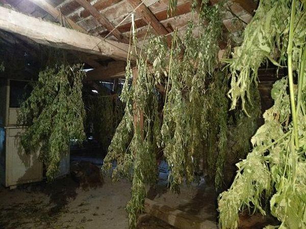 > Неговата плантация от марихуанаДосъдебното производство бе поето от Окръжната