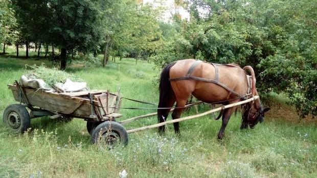 <div Две каруци с незаконна дървесина и моторен трион са