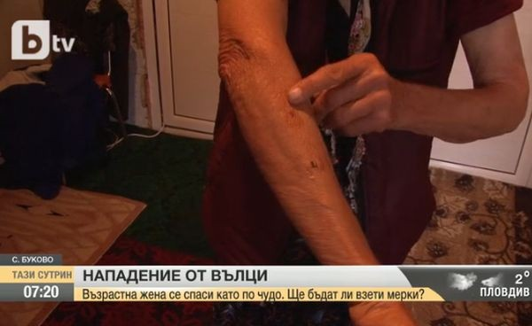 Нападение на вълк вдигна на крак жителите на първомайското село