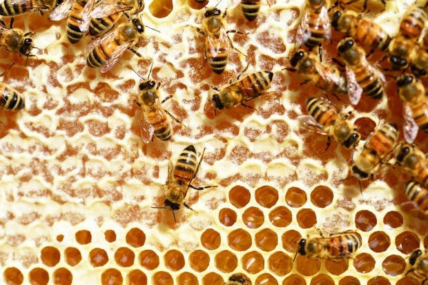 Около 30 пчелари от Варна ще участват в протест на