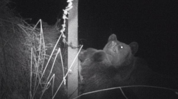 Камери заснеха мечка и малкото ѝ в имот в близост