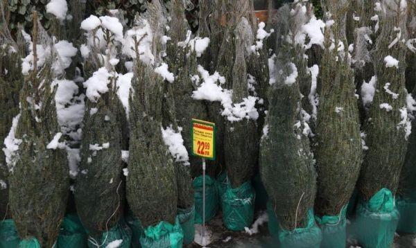 Дни преди Рождество в някои магазини и по пазарите започнаха