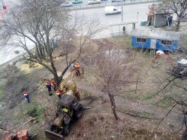 Снимка: Пловдивчанин: Помощ, спасете дърветата! Plovdiv24.bg изяснява ситуацията