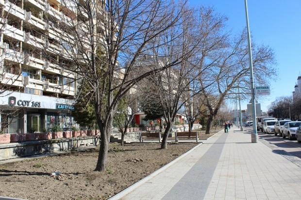 С нови 1420 храста и над 50 широколистни и иглолистни