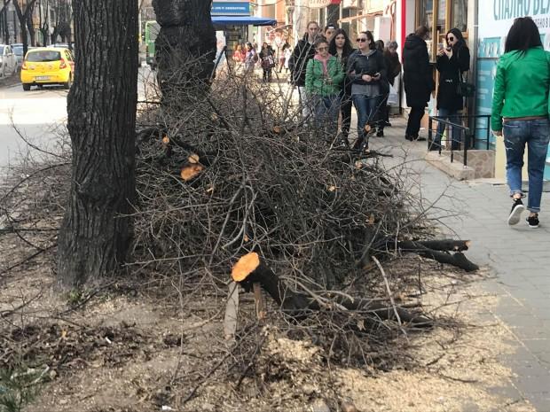 Varna24.bg След бурния вятър вчера, който засипа града за кратко