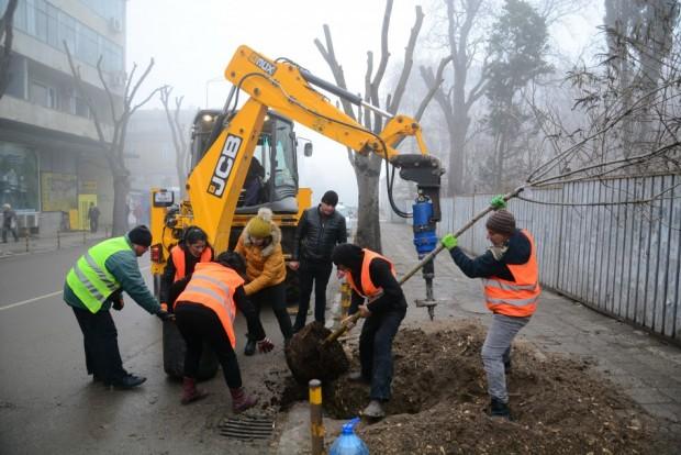 Акция за пролетно засаждане на дървета и храсти започва във