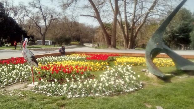 През месец май предстои ново, лятно зацветяване - с над