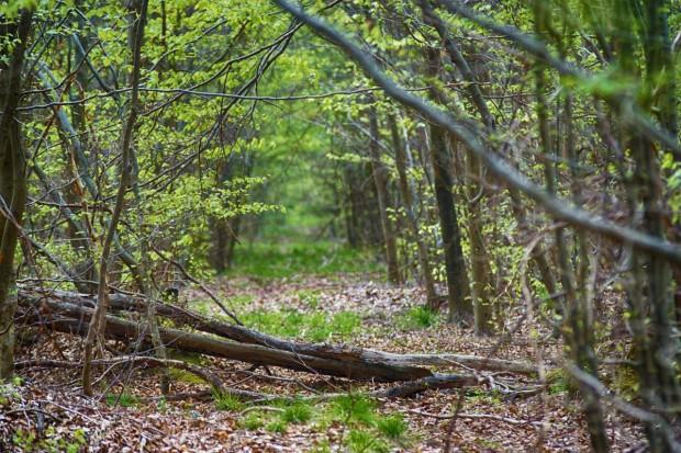 9-годишно дете е открито след спасителна операция в гориста местност