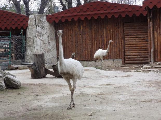 Снимка: Двойка бяло Нанду са най-новите обитатели на зоопарка във Варна