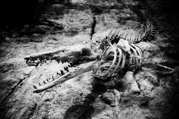 Снимка: Откриха останки от древни създания в динозавърско гробище