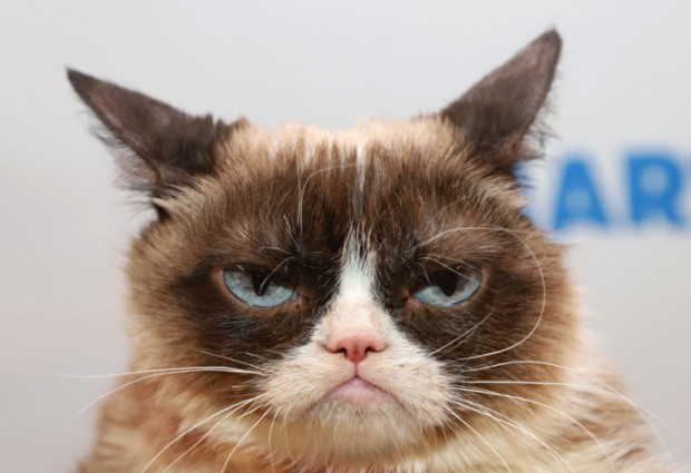 Котката Гръмпи (