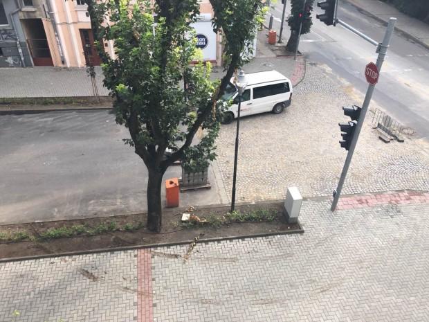 Снимка: Читател: Идиот мина с кола през цветя в центъра на Варна