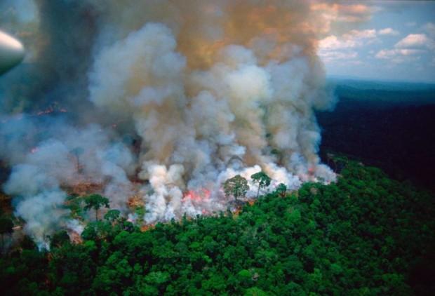 Пожарите в Амазония вече не са само проблем на Бразилия,
