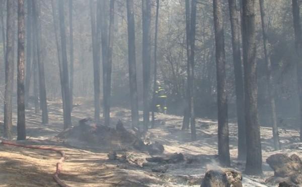 bTVВарненските огнеборци се справиха смело с голям пожар, тръгнал от