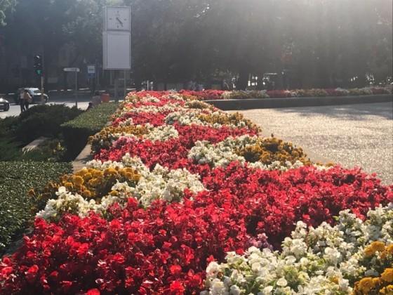 Новите пъстроцветни килими от красиви цветя отново ще радват варненци