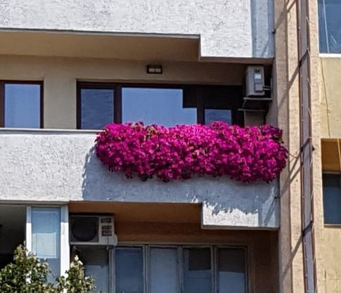 Varna24.bg Читател на Varna24.bg изпрати красиви снимки на варненски тераси,