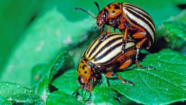 Ново проучване на университет в Мюнхен показва, че насекомите изчезват.