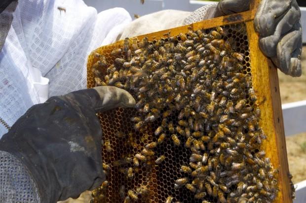 Пчелари излизат на протест тази вечер пред Министерството на земеделието.