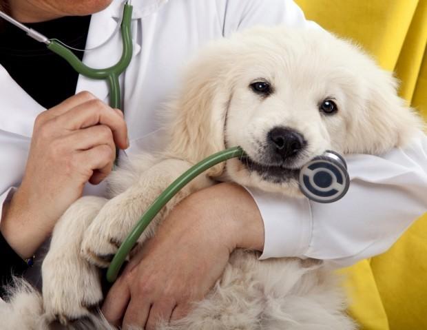 Днес е професионалният празник на всички ветеринарни специалисти. На 14