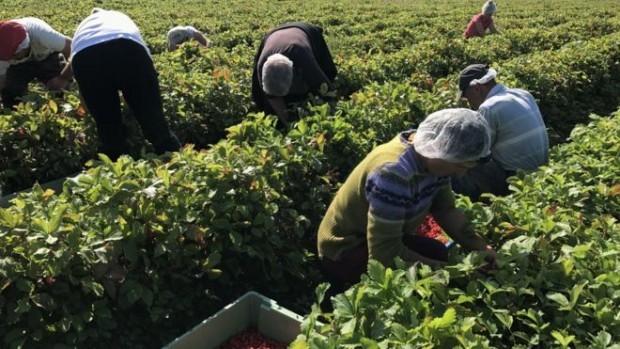 Великобритания ще започне да спира допускането на нискоквалифицирани работници от