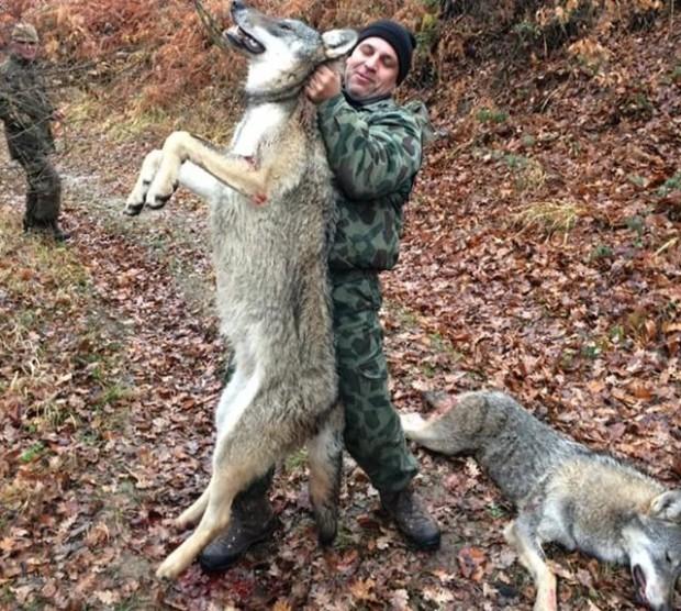 Повален е най-големият и свиреп вълк, бродещ в Балкана! Огромният
