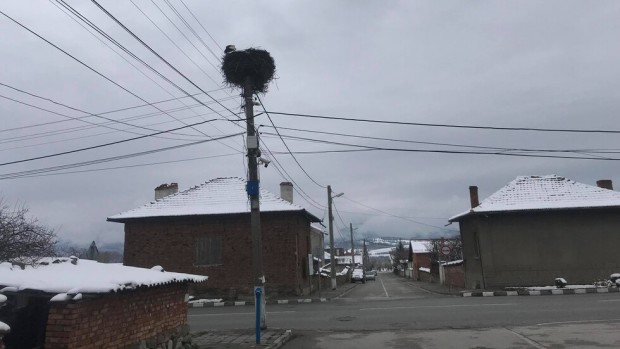 Първите щъркели пристигнаха в село Челопеч, Софийска област. Предвестниците на