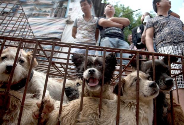 Първи град в Китай забранява яденето на кучета и котки.