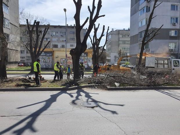 Varna24.bg Читател на Varna24.bg изпрати снимки от резитбата на клони