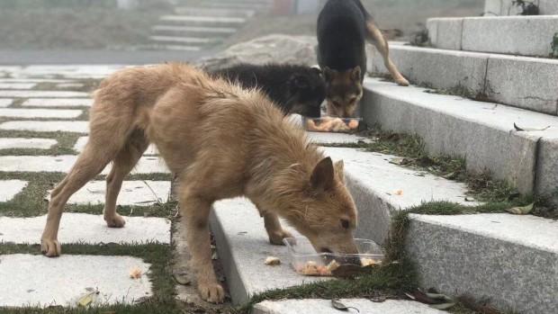 Бездомни кучета в Китай може да са пренесли COVID-19 на