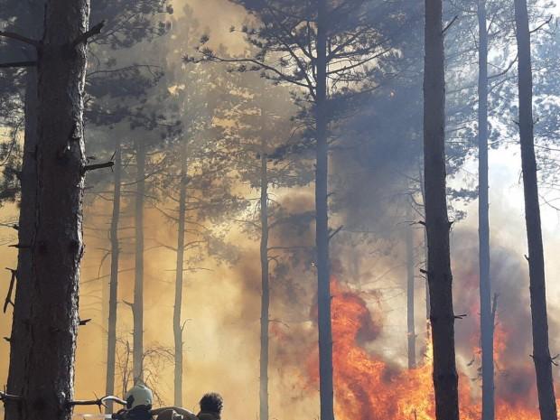 33 пожара са възникнали от началото на годината до момента