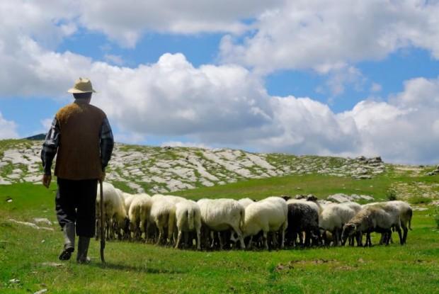 > Илюстрация47-годишният Ахмед А. бил нает да пасе стадото на